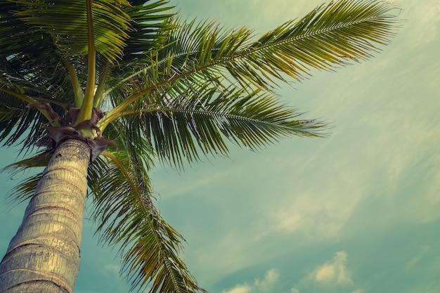 Praia palmeira a partir de baixo