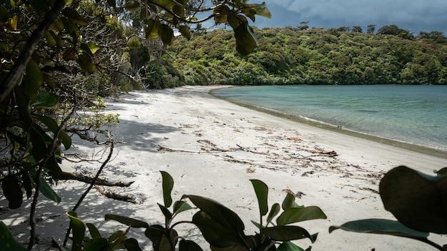 Praia remota com areia branca parcialmente emoldurada por galhos de árvores ilha de stewart, nova zelândia