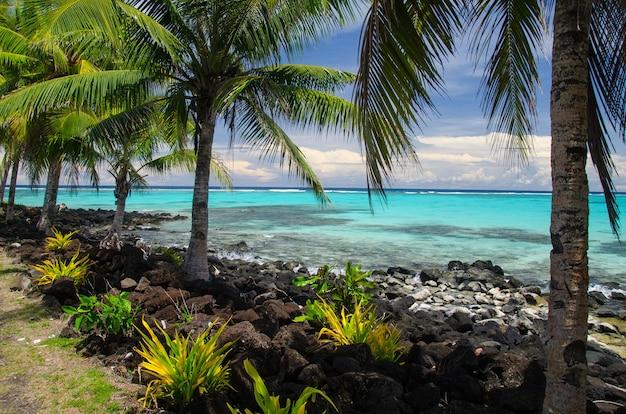 Praia rodeada de palmeiras e o mar sob o sol na ilha savai'i, samoa