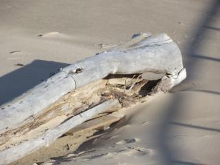 Praia tronco de árvore