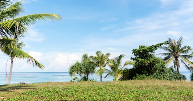 Praia tropical arenosa com moldura de coqueiro