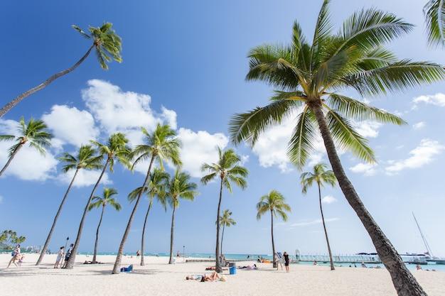 Praia tropical com coqueiro