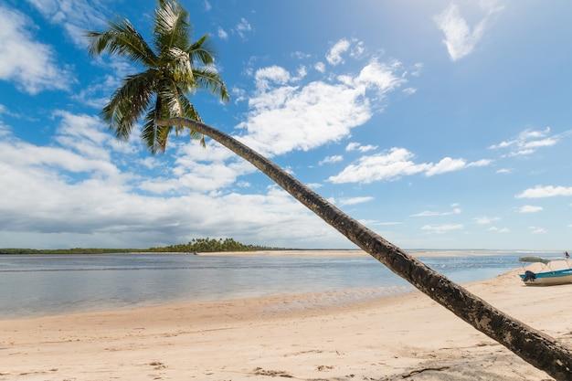 Praia tropical com coqueiros inclinados na ilha de boipeba, bahia, brasil.