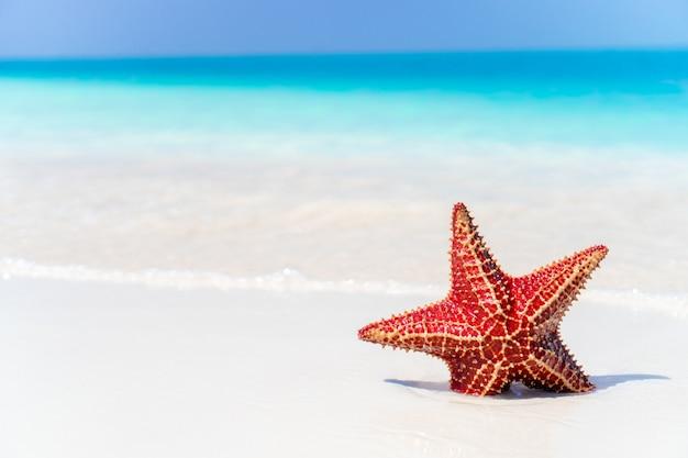 Praia tropical com estrela do mar
