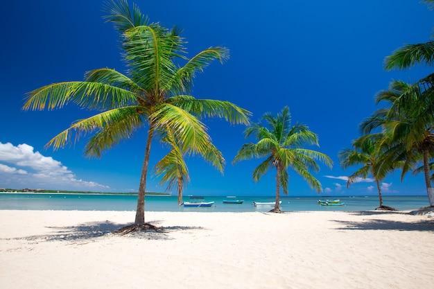 Praia tropical com palmeiras e lagoa azul
