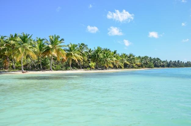 Praia tropical com palmeiras e mar azul-turquesa.