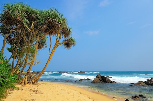 Praia tropical com palmeiras no sri lanka