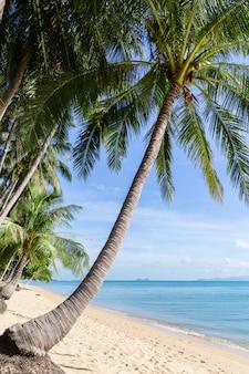 Praia tropical da areia com as árvores de coco na manhã. tailândia, ilha de samui.