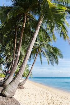Praia tropical da areia com as árvores de coco na manhã. tailândia, ilha samui, maenam.