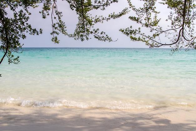Praia tropical e mar azul com galhos de árvores