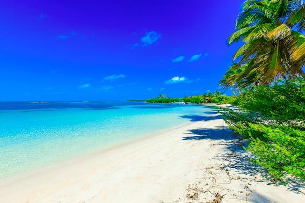 Praia tropical em dia ensolarado