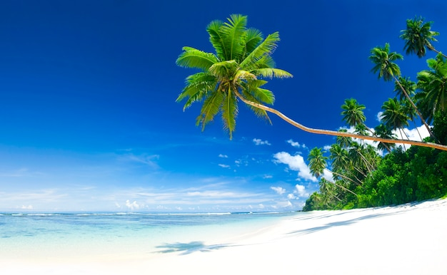 Praia tropical em samoa