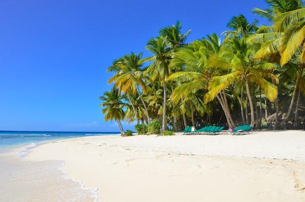 Praia tropical, ilha saona, república dominicana.