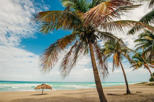 Praia tropical intocada com palmeiras