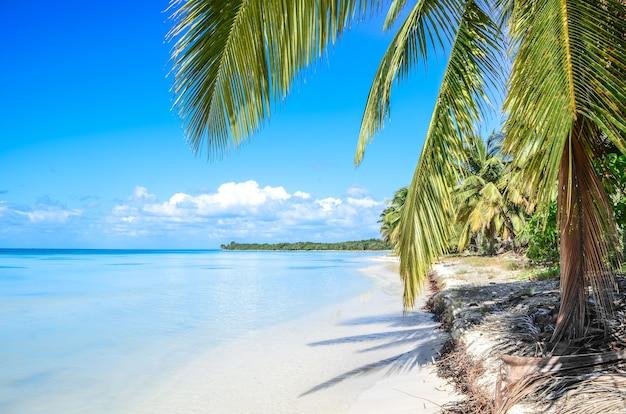 Praia tropical intocada na república dominicana.