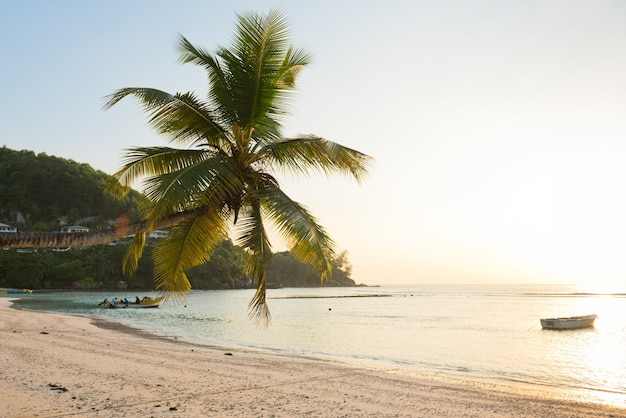 Praia tropical na ilha de mahe seychelles. sunleaks no pulmo e sol forte no lado direito