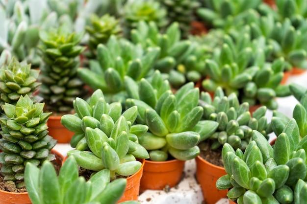 Prateleira com suculentas em uma floricultura.