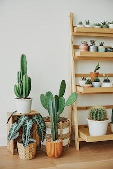 Prateleira de madeira para plantas com pequenos cactos fofos