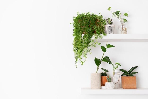 Prateleira de parede de planta com espaço em branco