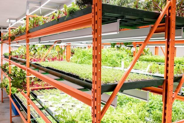 Prateleiras com mudas verdes de vários tipos de plantas agrícolas crescendo dentro de uma grande estufa