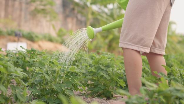 Pré-escolar infantil crescendo para aprender a regar a árvore da planta