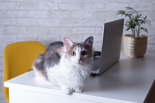 Preguiçoso no conceito de trabalho - gato perto de uma planta de escritório em casa laptop