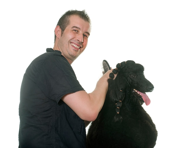 Preparação de poodle preto padrão