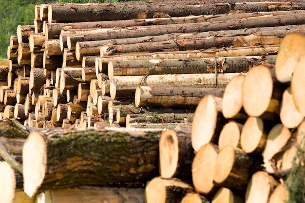 Preparação de toras de pinho, que são utilizadas para a produção de produtos de madeira