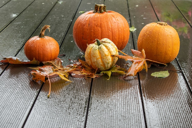 Preparação para helloween, abóboras no convés úmido com folhas molhadas e gotas de chuva