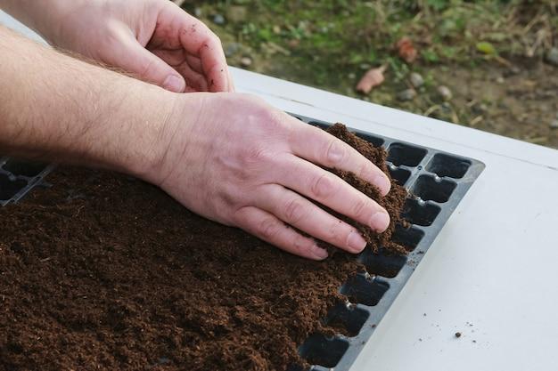Preparação para o plantio de sementes de pimenta em cassetes de plântulas plásticas preenchidas com solo de húmus.