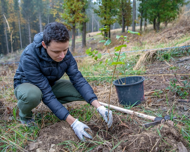 Preparando buracos na floresta para plantar árvores jovens