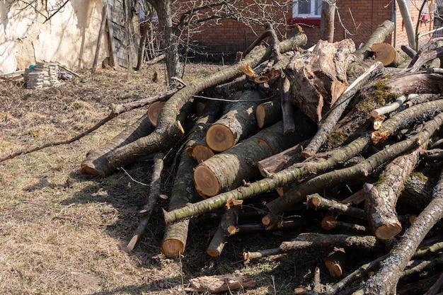 Preparando lenha para o inverno, troncos de cereja empilhados no quintal