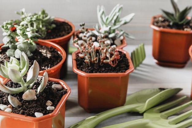 Preparando-se para a primavera para transplantar plantas. panela, pá, suculentas