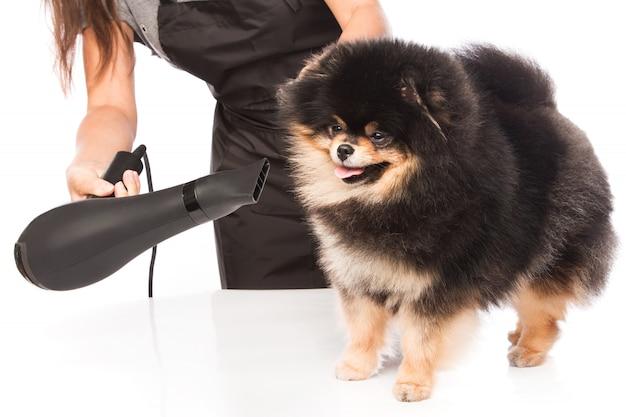 Preparar um cachorro