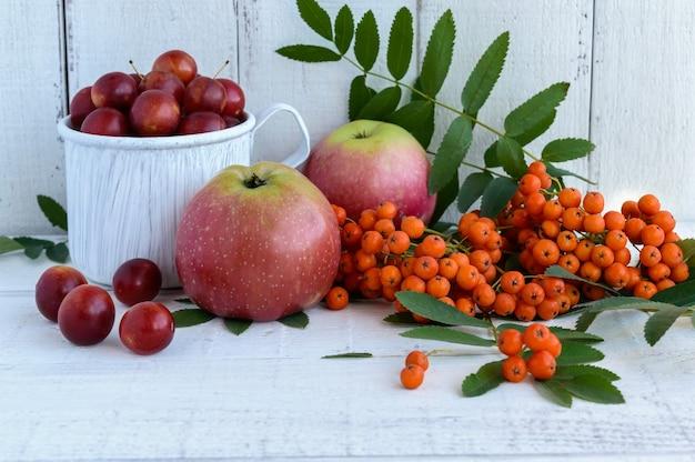 Presentes de outono: maçãs, ameixa cereja, cinzas da montanha em uma superfície branca. natureza morta em amarelo, laranja, vermelho.