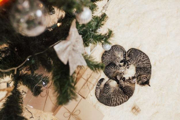 Presentes e gatinhos dorme sob a árvore de natal.
