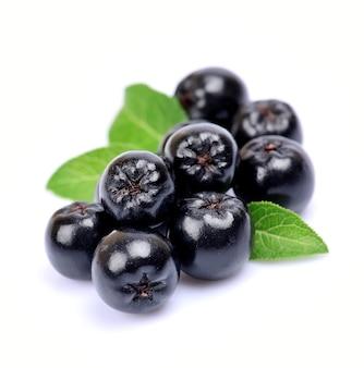 Preto chokeberry close-up. bagas pretas de aronia.