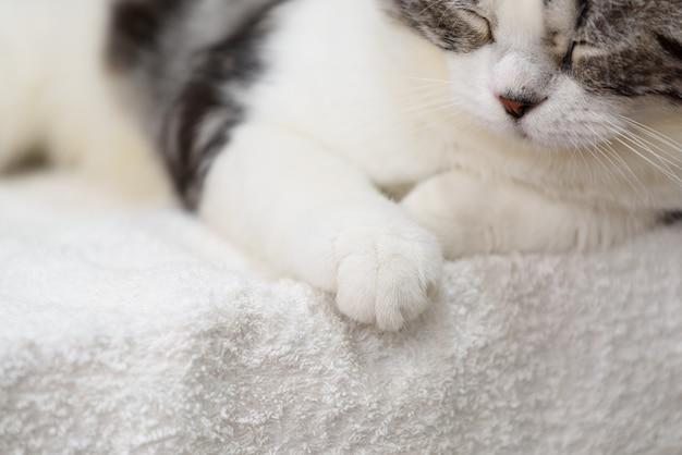 Preto e branco gato fofo dormir no pano branco acolhedor