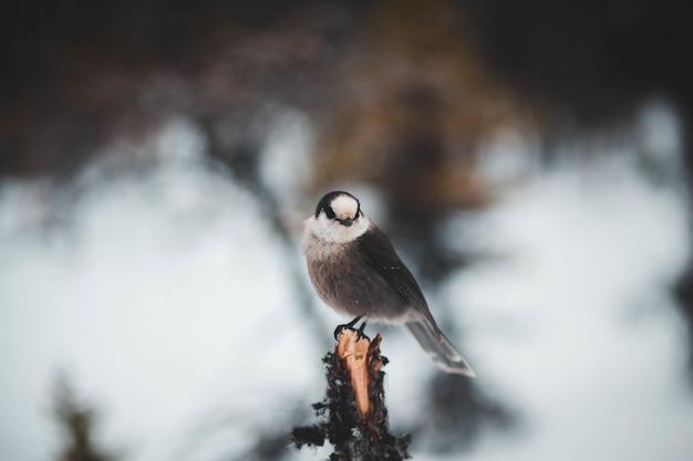 Preto pequeno pássaro bicudo na árvore