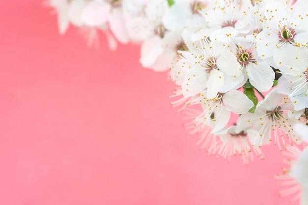 Primavera . árvores de cerejeira