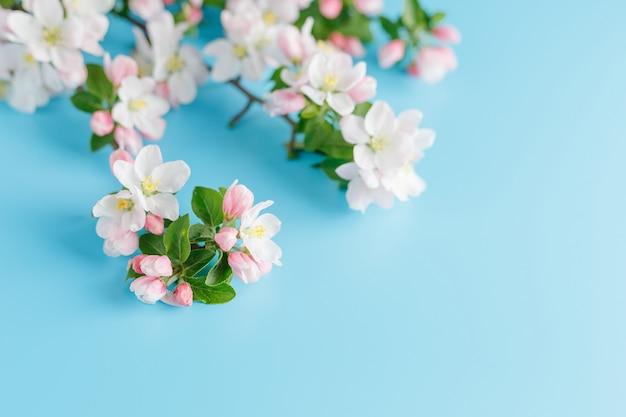 Primavera de florescência sakura em um azul