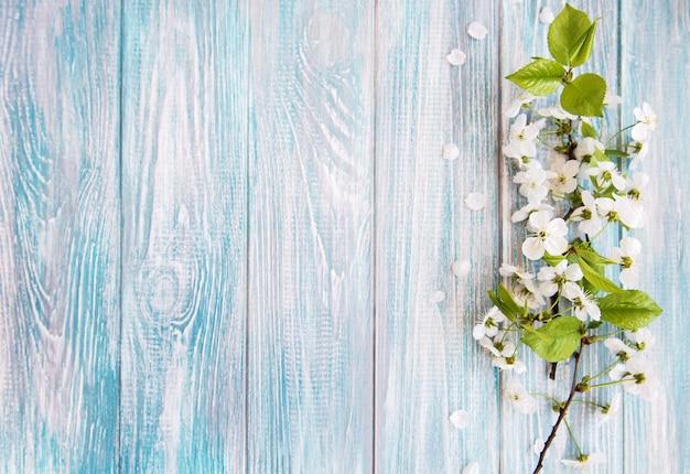 Primavera flor de cerejeira