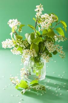 Primavera flor de pássaro-cereja em vaso sobre fundo verde