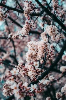 Primavera floração lindas cores e luzes