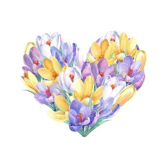 Primavera flores de açafrão em forma de coração. pintados à mão em aquarela.