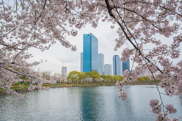 Primavera flores de cerejeira no fosso do castelo de himeji, japão