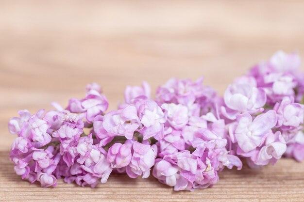 Primavera flores lilás rosa sobre fundo desfocado de madeira. flores delicadas. borda decorativa de lilás pequeno fechar com espaço de cópia. foco seletivo.