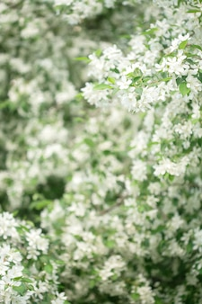 Primavera flores no jardim