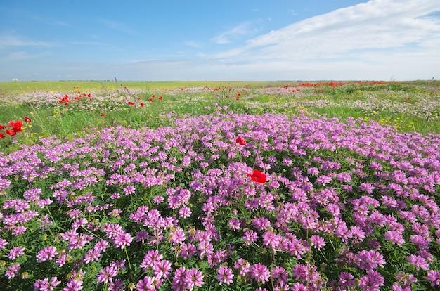 Primavera flores no prado