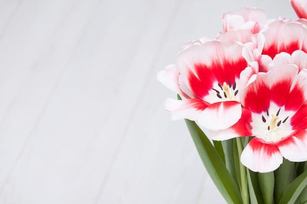 Primavera flores tulipas brancas vermelhas